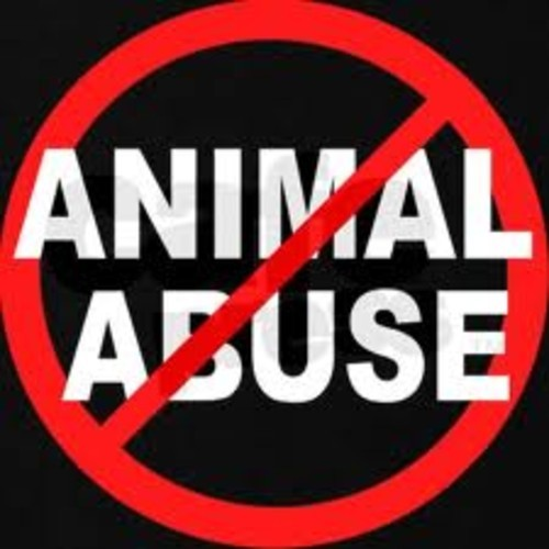 GTA, Henrix & Digital Lab VS Martin Garrix – Don't Hit Animals (BURNØUT BOOTLEG)